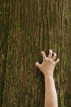 clinging: A hand grips the trunk of a cedar tree.