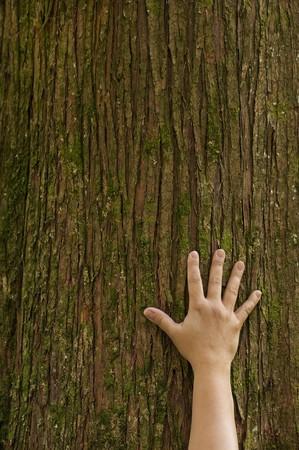 Una mano apodera del tronco de un árbol Foto de archivo - 7107618