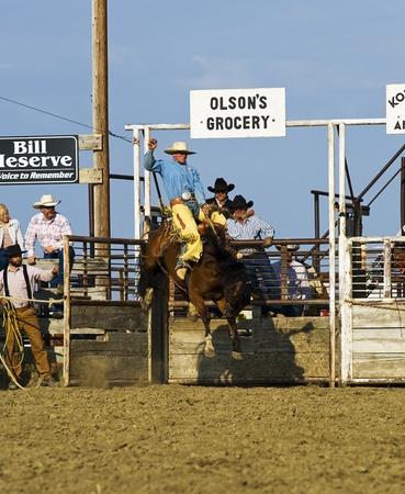 Winnett, Montana, USA - August 9, 2009 - Cowboy rides a bucking horse at a small town rodeo.