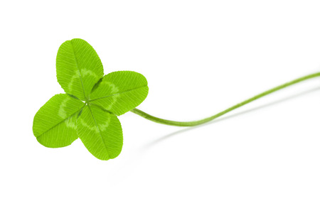 four-leaf clover for good luck Stock Photo - 23338660