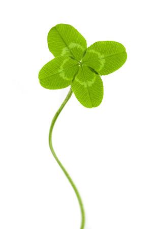 행운의 네 잎 클로버 스톡 콘텐츠