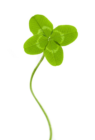 four-leaf clover for good luck photo