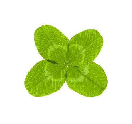 fourleaved: four-leaf clover for good luck