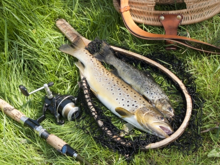 beautiful still life with trout and fishing tools photo