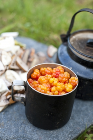 chicout�: Rubus chamaemorus moros m�rier est une plante originaire de la toundra alpine et arctique Anglais noms communs chicout�, ronce petit dans le Canada atlantique, Knotberry et Knoutberry Angleterre Averin et Evron Ecosse Banque d'images