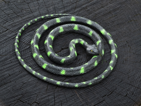 rubbery: black and green snake curled up on the black stump Stock Photo