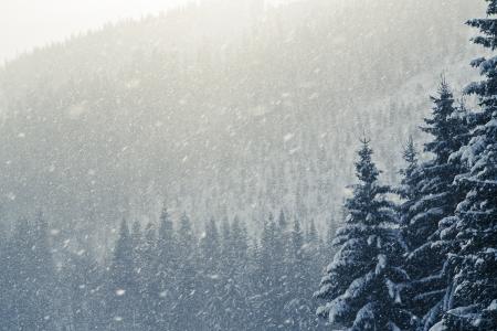 눈 덮인 산의 겨울