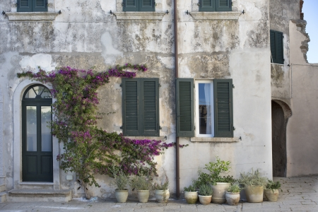 street in Marciana with flowering plants photo