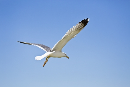 seagull flying in the blue sky Stock fotó