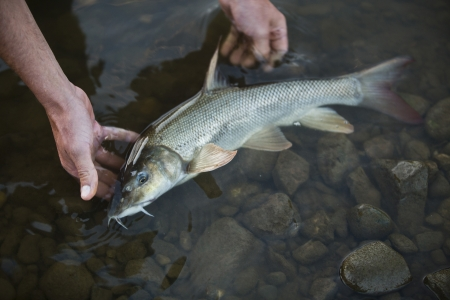 barbel: Barbels are group of small carp-like freshwater fish, almost all of the genus Barbus and is a popular sport fish