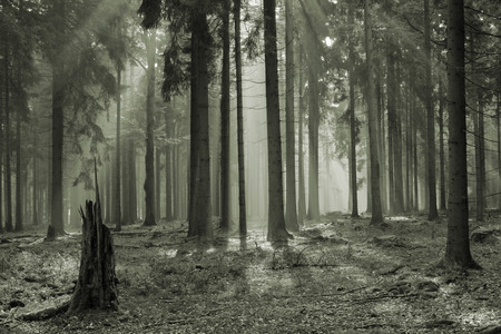 mystic forest with morning sunbeams Czech republic Cesky Les photo