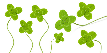 four leaved: four leave clover symbol for happy time