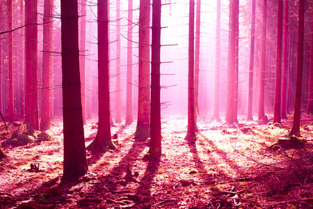 fantasy forest scenery with a starnge atmosphere photo
