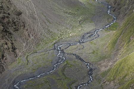 caucas: sheeps in the Caucas mountines at Azerbijan