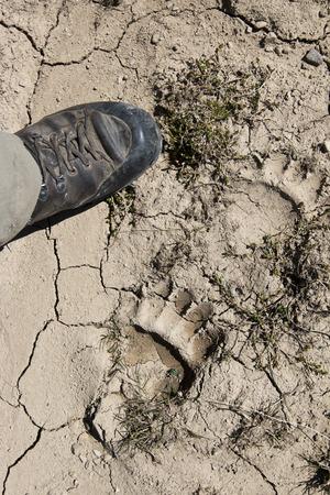 mud print: bear foot print on mug and man foot