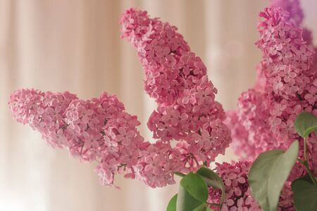 Delicate bouquet of lilacs on a pink background. Blurred background with spring flowers, bokeh. Bouquet of lilac close-up. Womans day