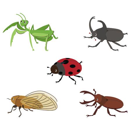 cigarra: Insecto Vectores