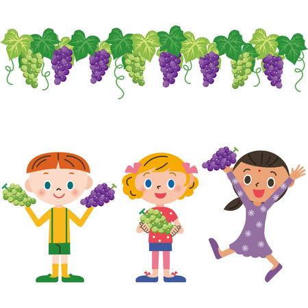 gathering: Grape gathering, Illustration