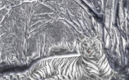 tongue: white bengal tiger lying in the snow