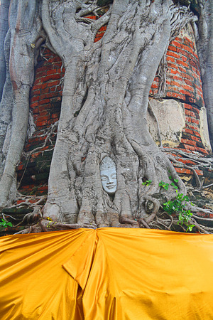 abbot: face of Buddha statue in the tree Stock Photo