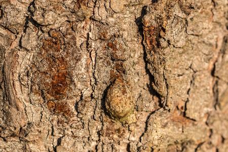 Brown-Baumstamm von alten Bäumen im Wald Standard-Bild