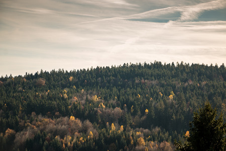 Farbiger Herbstlaub auf den Bäumen des Waldes
