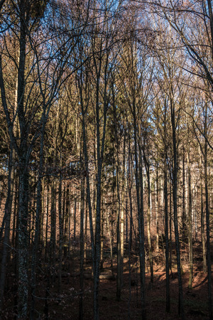Bare trees in the middle of a colorless forest