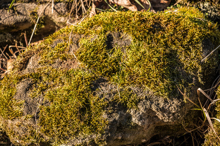 Mossy rocks on the ground in the garden