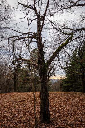Autumn forest Lizenzfreie Bilder
