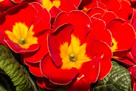 Red flowers Lizenzfreie Bilder