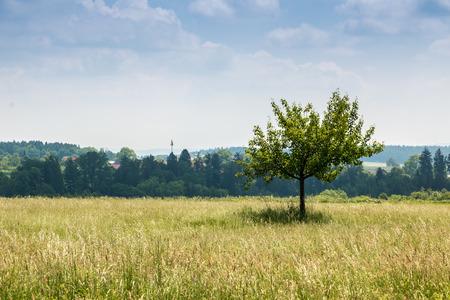Grüne Felder und ein Baum Standard-Bild