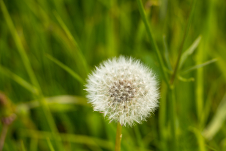 White flower on the fields