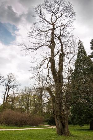 Big tree Lizenzfreie Bilder