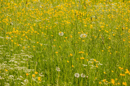 Green fields and meadows Stock Photo