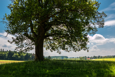 Green fields and a tree