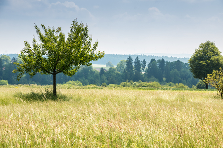 Green fields and trees