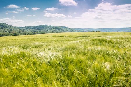 Green fields and forest Lizenzfreie Bilder