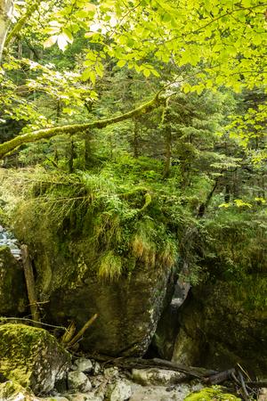 Wildbach und der Wald