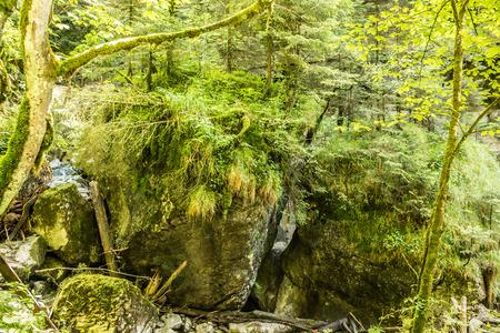 Grüne Felsen und wilder Bach