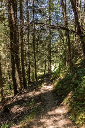 Einsamer Weg durch den Wald Standard-Bild
