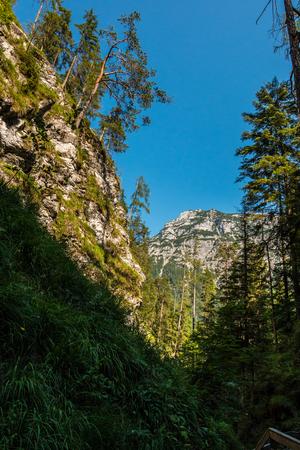 Berge und hohe Bäume im Wald