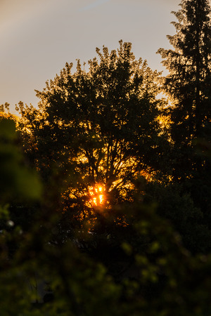 Sunrise in the morning through trees
