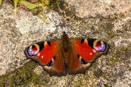 Butterfly on rock Stock Photo