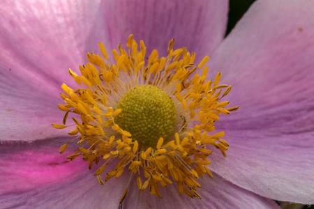 Violet flower in the park