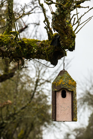Little bird table on an old mossy tree Banco de Imagens