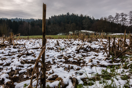 Harvested field and white snow Standard-Bild