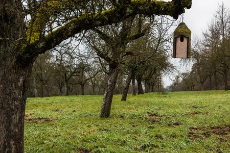 Little bird table on an old mossy tree Standard-Bild