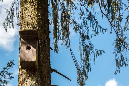 Little bird table on an old mossy tree Stockfoto