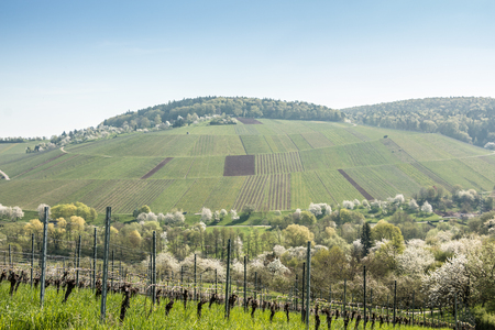 Vineyards and blooming trees near the village Stock Photo