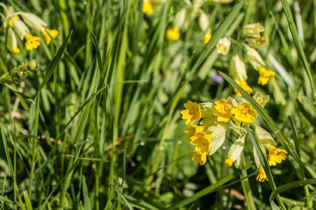 Yellow flowers and green leaves on the green field Standard-Bild